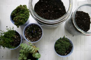 apothecary jar terrarium soil