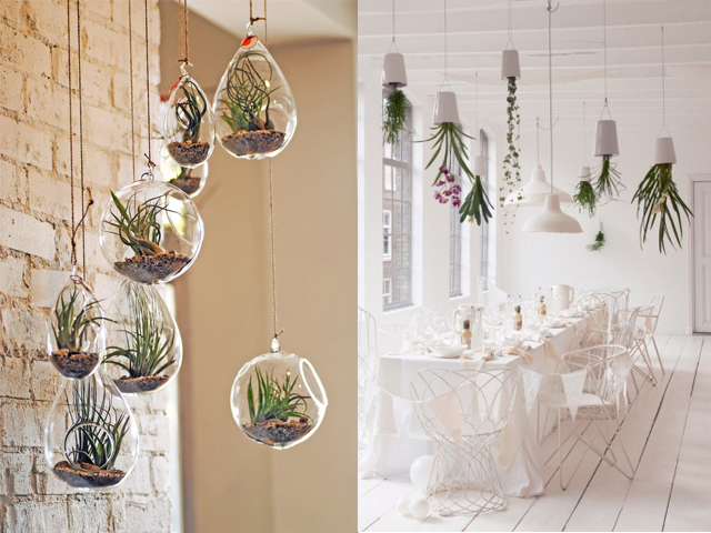air-plants-interior