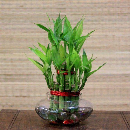 Bamboo-shoots-in-Glass-jar_edited-450x450