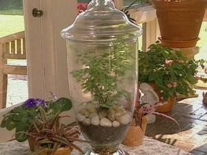 apothecary jar terrarium stnes